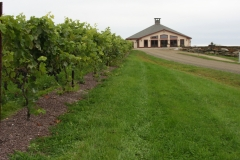 Pavilion-vines